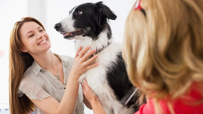Animal Magnetism Pays Off in Franchising