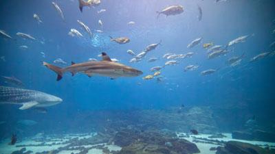 8 Lessons for Entrepreneurs from the Shark Tank