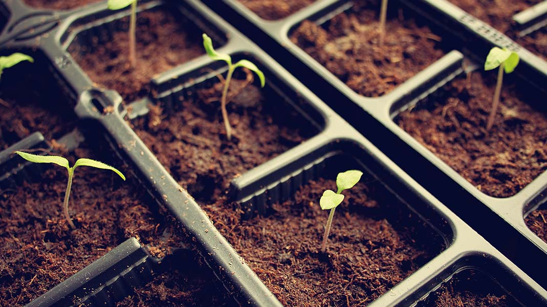 5 Ways to Ensure Success in a Growing Business
