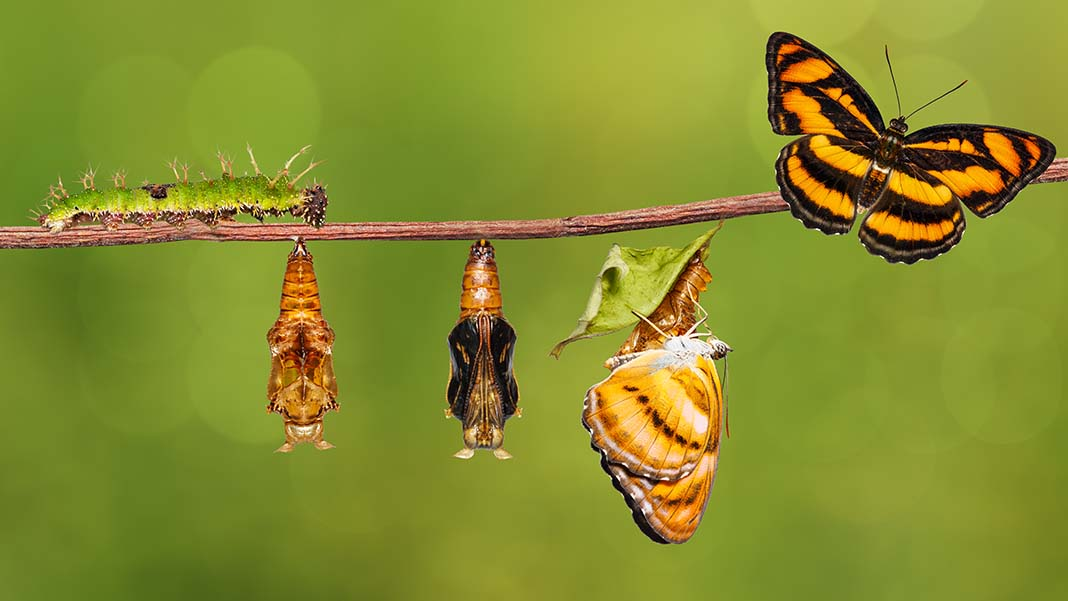 Can Your Business Survive the Traditional Life Cycle?