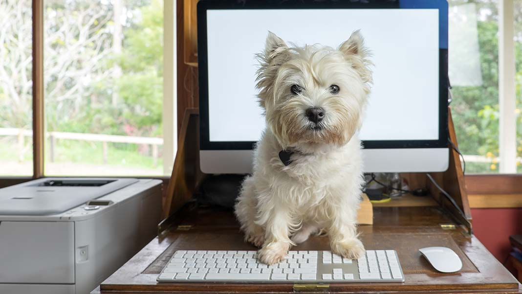 The New Office Normal: Bringing Fido to Work