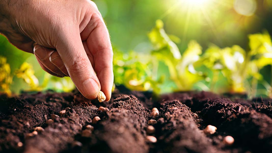 Planting Your Brand's Seeds